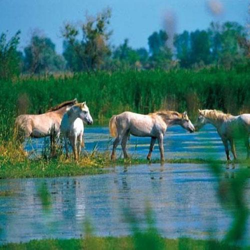 week-end en Camargue, chevaux