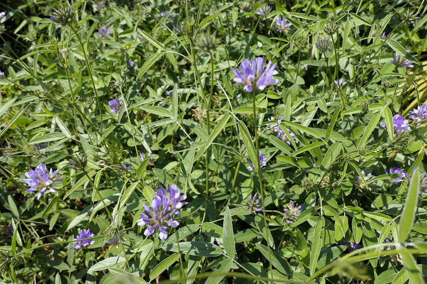 Fleurs Zingaro-Crédit Numéro Une
