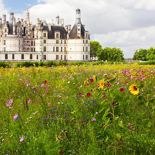 Château Chambord - Sélection des châteaux de la Loire à visiter en famille