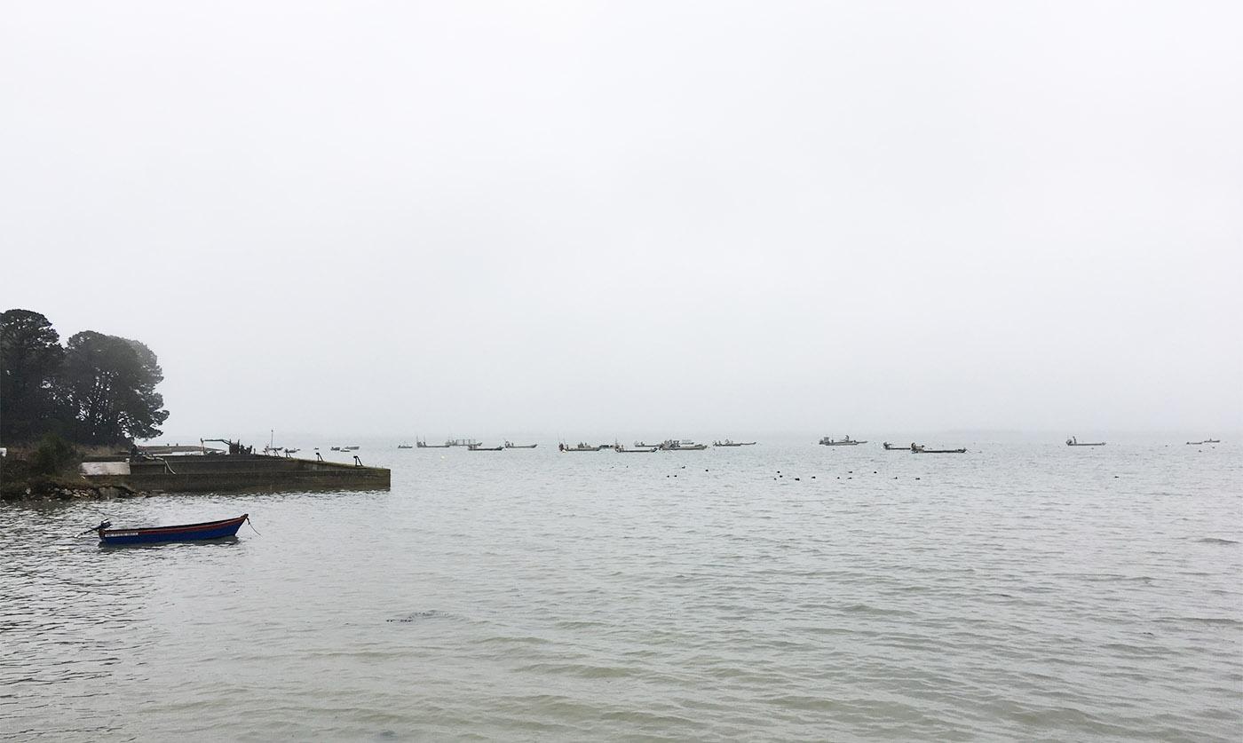 Les huitres - Aux Filles des marées