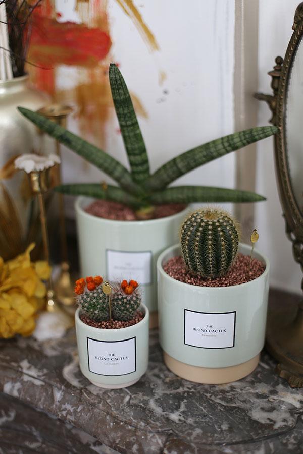 the blond cactus
